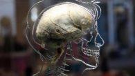"""Lo scenario del """"cervello in un barattolo"""", in cui uno scienziato pazzo disincarna il cervello di una persona e lo collega a una realtà simulata, al tempo stesso è una comune finzione scientifica oggetto d'innumerevoli esperimenti mentali. Ora, una versione limitata di tale scenario potrebbe essere appena diventata una realtà, […]"""