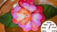 La rivista Nature Communications ha pubblicato la notizia di un fiore artificiale progettato dai ricercatori della University of North Carolina con petali che si aprono a poco a poco, senza alcuno stimolo esterno, come ad esempio variazioni di luce, di calore o di pH. Il fiore è inutile in sé, […]