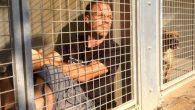 Rémi Gaillard noto per i suoi video Youtube con scherzi esilaranti e talvolta scandalosi, per una volta è serio nel sensibilizzare il problema della condizione dei cani abbandonati. Recentemente ha annunciato che l'11 novembre 2016, entrerà in una gabbiadel canile SPA a Montpelier, dove rimarrà chiuso fino a quando tutti […]