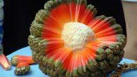 Dimenticate mele, pere e clementine, in alcune parti del mondo, il frutto non è solo a forma di sfera con una buccia colorata, per esempio, nelle Hawaii mangiano un frutto con punte multicolori,più che qualcosa di commestibile somiglia a un Poké Ball. Il sito Playground Mag riporta che il misterioso […]