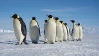 L'avviso pubblicato sul sito della Società Tedesca di Ortopedia e Traumatologia rileva che camminare come i pinguini comporta lo spostamento del busto in avanti in modo che il baricentro generale del corpo (centro di gravità: punto in cui si applica la risultante delle forze di gravità che agiscono nei diversi […]