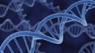 La nuova ricerca suggerisce che le cellule all'interno del corpo umano, lottano per la vita, cercano di sopravvivere tentando di ripararsi dopo la morte. I risultati di uno studio pubblicato sulla rivista Open Biology dimostrano che parti del corpo umano vivono anche dopo l'avvenuta morte. Peter Noble autore dello studio, […]