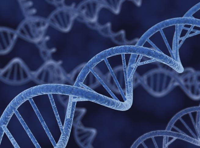 Segni di vita cellulare dopo la morte