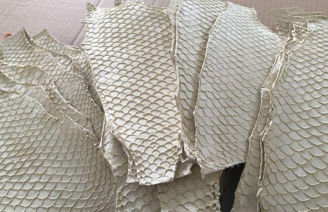 pelle pesce Tilapia cura ustioni