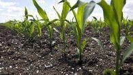 Il fosforo è un elemento essenziale contenuto in molti composti cellulari, quali il DNA e l'ATP vettore energetico. Tutta la vita ha bisogno di fosforo, le rese agricole sono migliorate quando il fosforo è stato aggiunto alla crescita delle piante e la dieta del bestiame, di conseguenza, è usato a […]