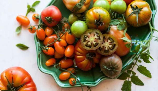 Pomodori lectina