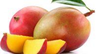 """Mango il """"profilattico molecolare"""" Il mango oltre alcune ricette che lo vedono protagonista, nel mondo dei prodotti è stato a lungo un frutto sottoutilizzato e sottovalutato. Ora, prove scientifiche suggeriscono che un composto nascosto nella morbida polpa d'oro del frutto potrebbe risolvere un enigma che i ricercatori hanno cercato di […]"""