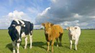 Gli scienziati hanno fatto un passo avanti nella ricerca per trovare un vaccino contro l'HIV, in uno studio condotto con i vitelli, hanno dimostrato di poter suscitare una risposta anticorpale largamente neutralizzante all'HIV immunizzando gli animali con proteine che imitano le strutture di sviluppo dell'HIV. I risultati sono promettenti per […]
