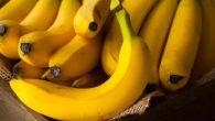 """Gli scienziati in Australia hanno creato banane dorate color arancio ricche di provitamina A, potrebbero salvare la vita di centinaia di migliaia di bambini che ogni anno muoiono per mancanza di questa vitamina. Le banane """"biofortificate"""" sono state sviluppate con diverse varianti di piante di banana, prima in serra per […]"""