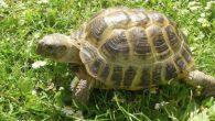 """Gli autori di un nuovo studio """"Good vibrations: a novel method for sexing turtles"""" (Buone vibrazioni: un nuovo metodo per il sessaggio delle tartarughe), in cui i ricercatori hanno utilizzato un vibratore, spiegano che, oltre ai maschi e alle femmine che sembrano uguali in forma e dimensione, le tartarughe individualmente […]"""