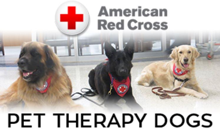 Croce rossa americana soccorso cani e gatti