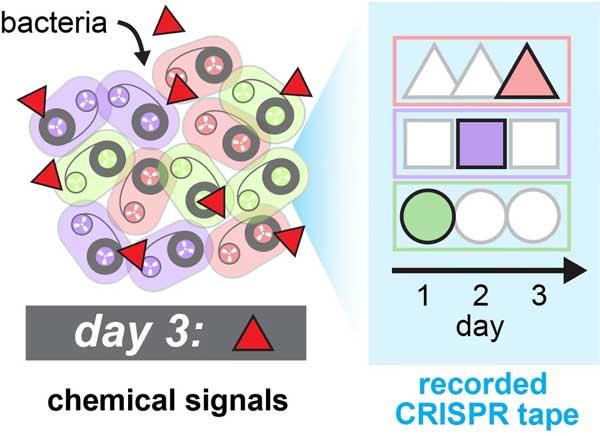 Batteri modificati per registrare loro attività
