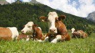 Esperti nel Regno Unito hanno fornito agli agricoltori un consiglio davvero insolito chiedendo loro di seppellire la biancheria intima nel loro terreno agricolo. Il consiglio è stato diramato da Agricultural and Horticultural Development Board (AHB) e dal Quality Meat Scotland (QMS) (rispettivamente Associazione per lo sviluppo dell'agricoltura e l'orticoltura (AHDB); […]
