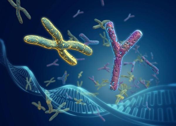 Cromosoma-Y