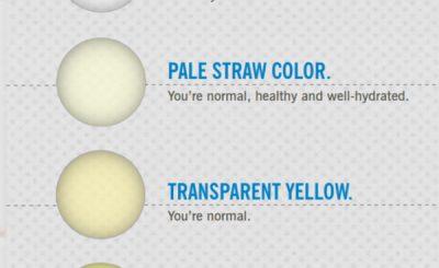 Infografica colore urina