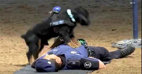 Poncho cane primo soccorso