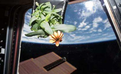 Piante coltivate nello spazio