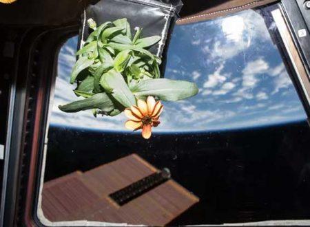 Ultima frontiera della ricerca sul cancro: inviare le piante medicinali nello spazio per aumentare la loro capacità curativa