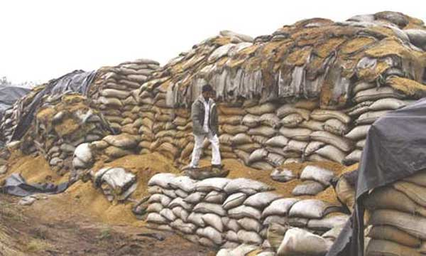 Conservazione sacchi di frumento - India
