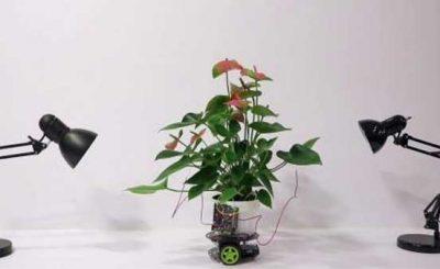 Elowan pianta d'appartamento cibernetica