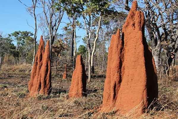 termitaio termiti edifici freschi