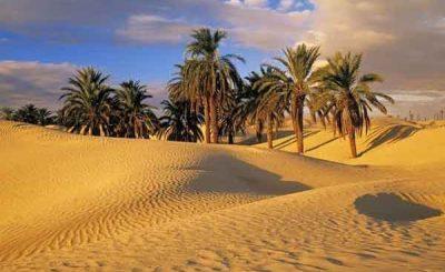 Alberi nel deserto