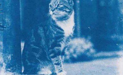 Mathieu Stern foto centenaria gatto