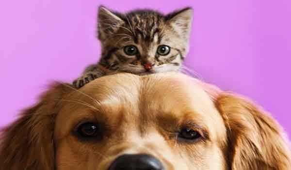 Cani e gatti test coronavirus Covid-19