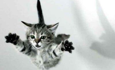Gatto salto nel vuoto